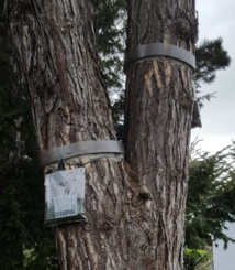 Eco-piège en place