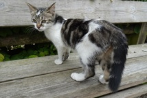 Stérilisation des chats errants