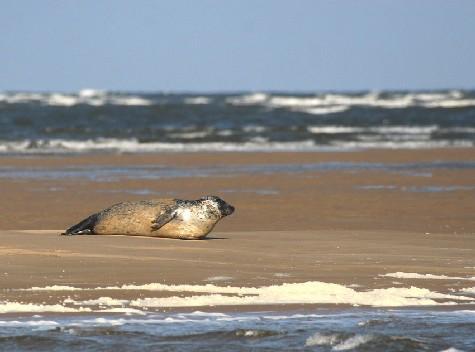Que faire en cas d'échouage de mammifères marins?