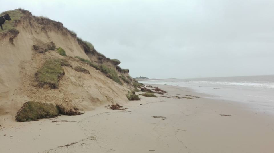 Attaquées au pied par le flot, les dunes s'éboulent