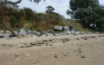Quelques plantes du littoral de Saint Jean le Thomas